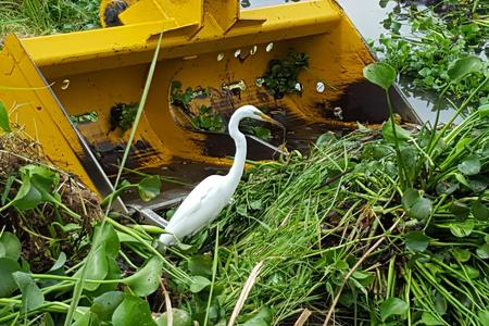 Heavy Equipment bucket in vegetation with white egret in foreground