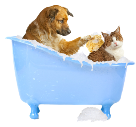 Cat Wash The Dog