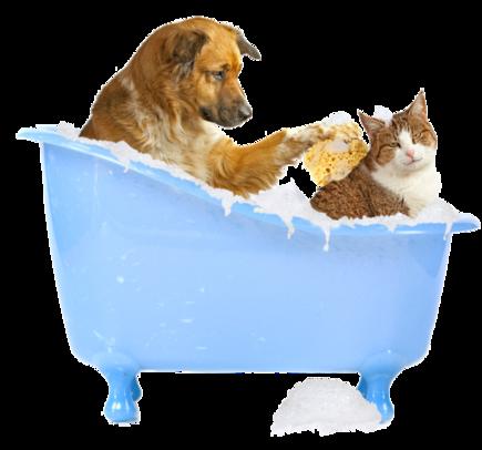 Dog Supplies Cat Supplies