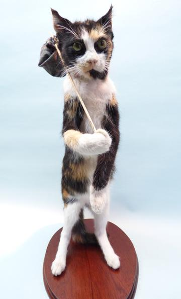 Adrian Johnstone, professional Taxidermist since 1981. Supplier to private collectors, schools, museums, businesses, and the entertainment world. Taxidermy is highly collectable. A taxidermy stuffed Cat With Knapsack, in excellent condition.