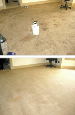 green rhino carpet cleaning results 2