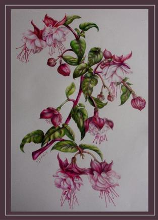 Botanical Colour Pencils Fuschias