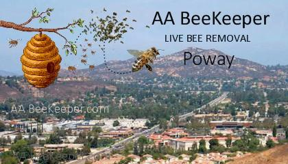 Poway Bee Removal