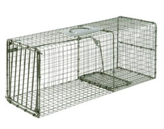 Single Door Cage Trap for raccoon, cat and armadillo