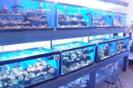 Saltwater fish store saltwater aquarium maintenance for Marine fish store