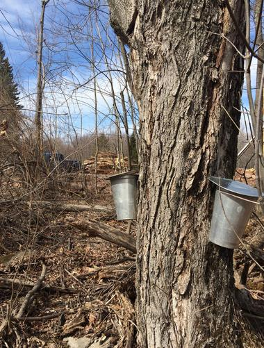 buckets hanging on a tree