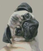 Cross Stitch Chart of a Pug with head tilted