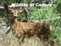 Link to Mammals and Reptiles and more at Cedars.