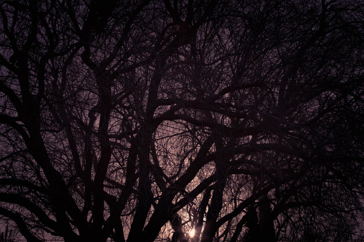 forest sunset branches contrast