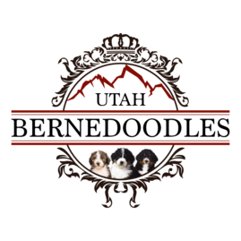Utah Bernedoodles Puppies