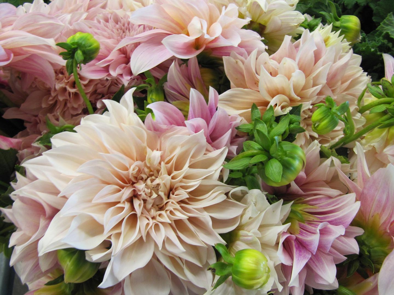 sf flower mart in san francisco ca