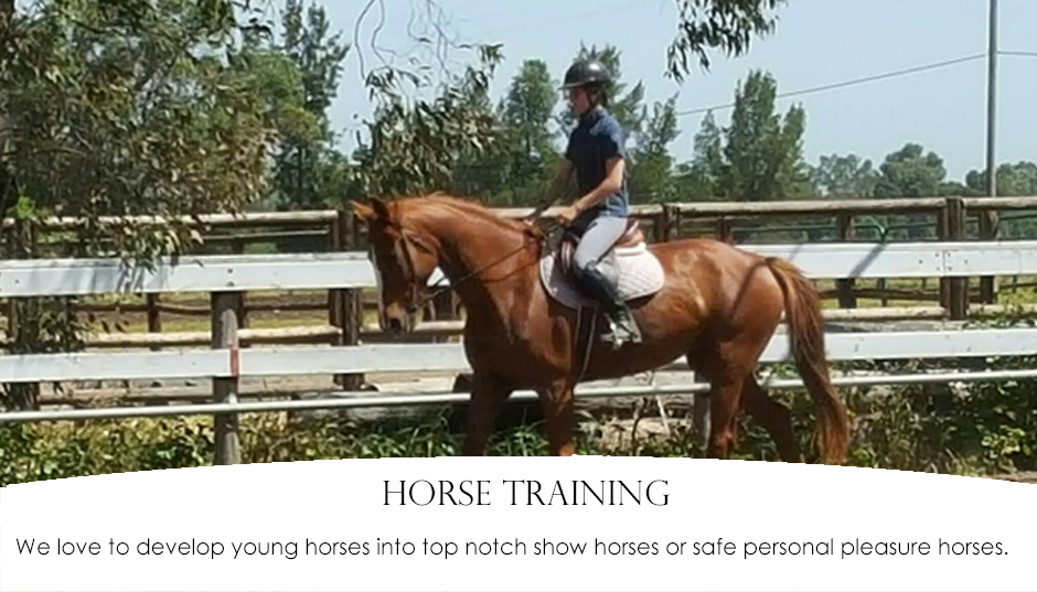 Pine Trails Ranch - Horse Riding Lessons, Horse Boarding