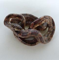 Adrian Johnstone, professional Taxidermist since 1981. Supplier to private collectors, schools, museums, businesses, and the entertainment world. Taxidermy is highly collectable. A taxidermy stuffed Corn Snake (544) in excellent condition. Mobile: 07745 399515 Email: adrianjohnstone@btinternet.com