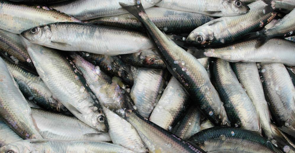 Randazzo's Seafood | Bronx NY | Arthur Avenue