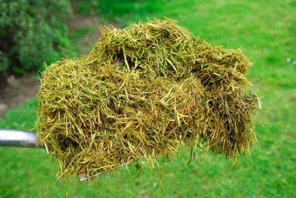 Best grass clippings removal services in Lincoln NE | LNK Junk Removal
