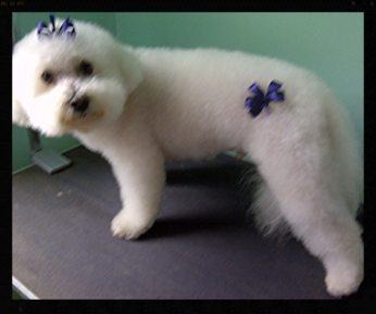 Best Care Dog Grooming Mission Bc