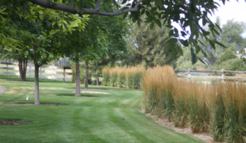 HOA maintenance by Wild Earth Gardens in Boulder, Colorado