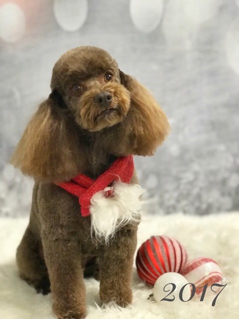 Welcome to canine design dog grooming in reno nevada dog grooming done right solutioingenieria Image collections