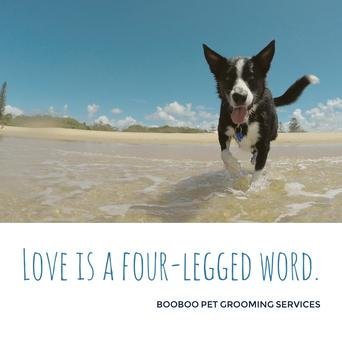 Booboo pet grooming services dog grooming cat grooming seaway plaza 2469 lake shore blvd w etobicoke solutioingenieria Choice Image