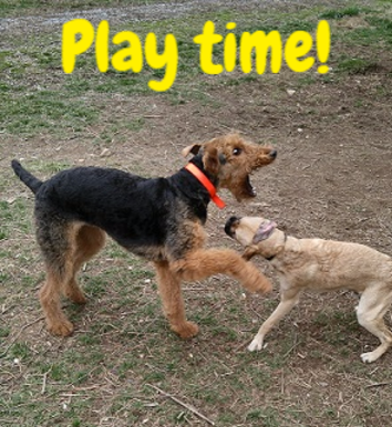 Pigeon Forge dog boarding - Pigeon Forge doggie day care - Gatlinburg dog boarding - Gatlinburg dog daycare