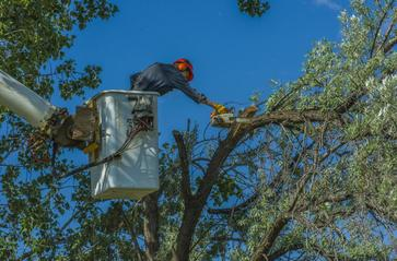 A tree service expert in Elk River, MN