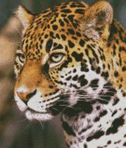 Cross Stitch Chart Pattern of a Jaguar