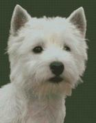 Cross Stitch Chart of a White West Highland Terrier