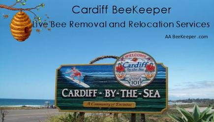 Cardiff Bee Removal Services