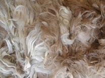 Light Fawn Alpaca Fleece