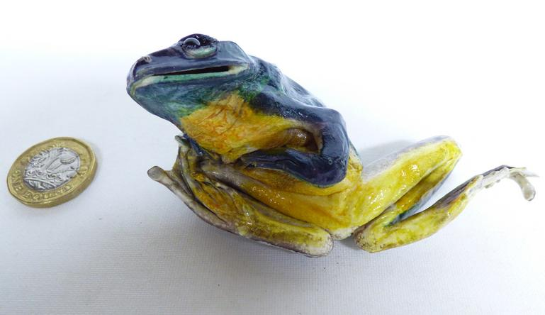 Adrian Johnstone, professional Taxidermist since 1981. Supplier to private collectors, schools, museums, businesses, and the entertainment world. Taxidermy is highly collectable. A taxidermy stuffed Green Frog (594) in excellent condition. Mobile: 07745 399515 Email: adrianjohnstone@btinternet.com