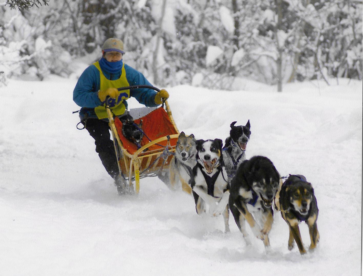 arctic star dog sleds