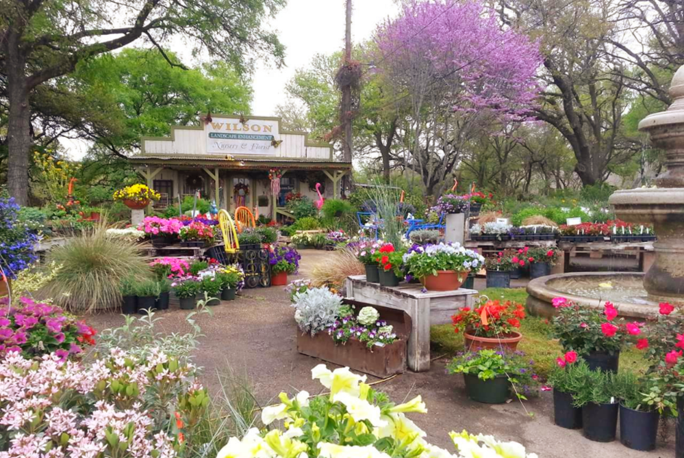 Beautiful and colorful plants, flowers, shrubs, annuals, perennials, succulents and more in the front of Wilson Landscape Nursery and Florist in Helotes Texas