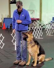 Gopal and Mango doing Rally Obedience