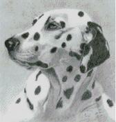Cross Stitch Chart of a Dalmatian original artwork by Nick Clark