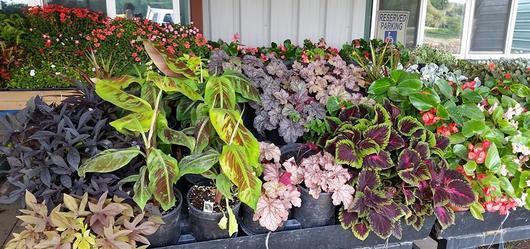 Bedding plants & Supplies