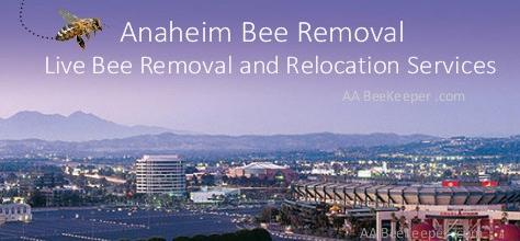 Anaheim Bee Removal and BeeKeeper services