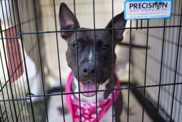 Wags 2 Wishes Animal Rescue, Inc