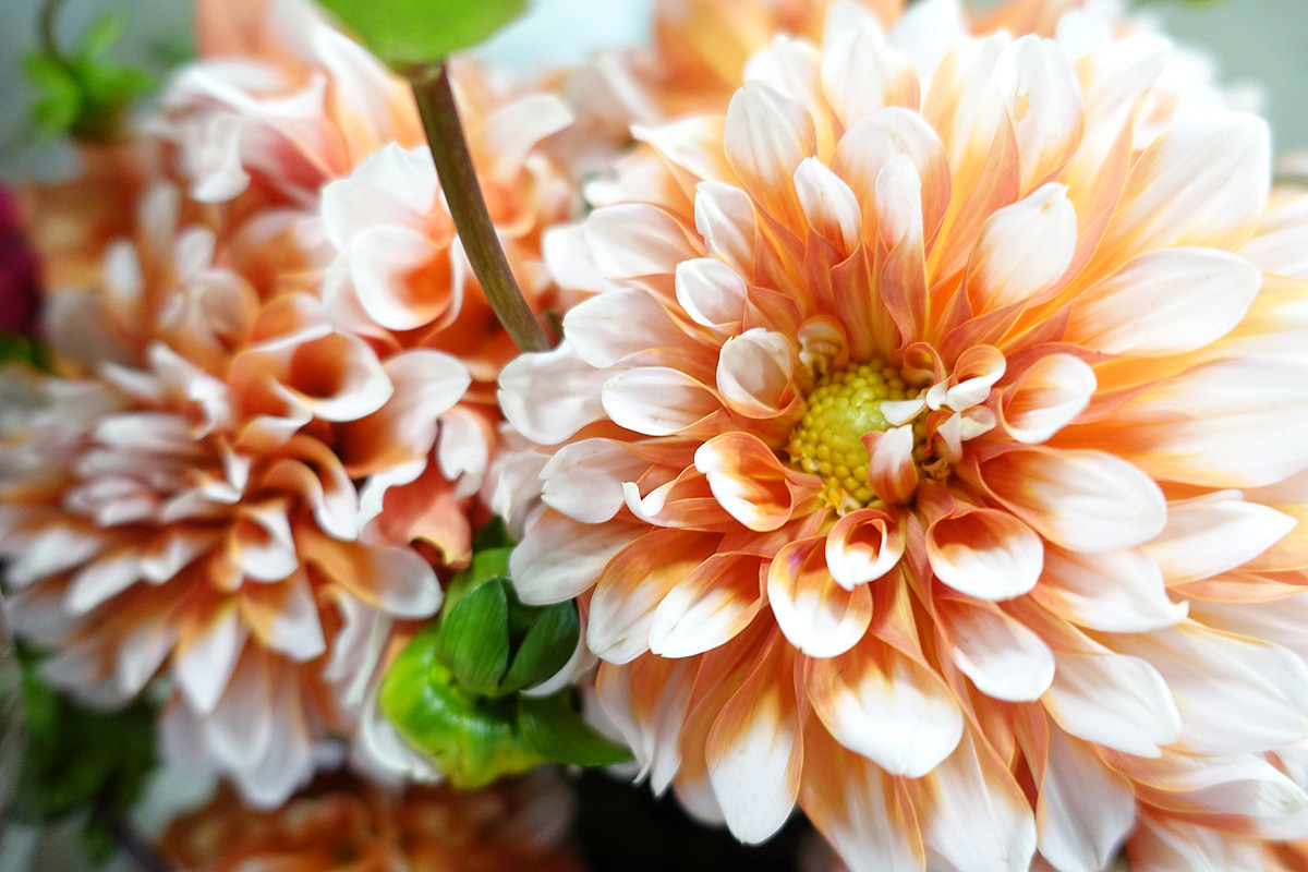 Sf flower mart in san francisco ca locally grown izmirmasajfo Image collections