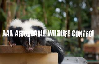Affordable Skunk Removal