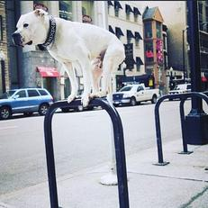 Joe Diesel Standing on a Bike Rack