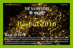 Best of Me Sahyadri 2016 Nature