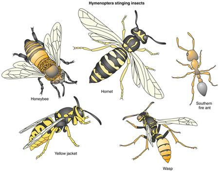 The difference between a yellow jacket, wasp, and honey bee