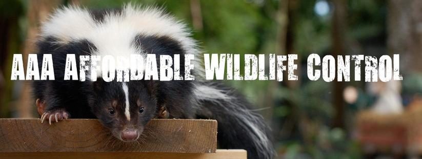 AAAWILDLIFE.ca AAA Affordable Wildlife Control Reviews Toronto
