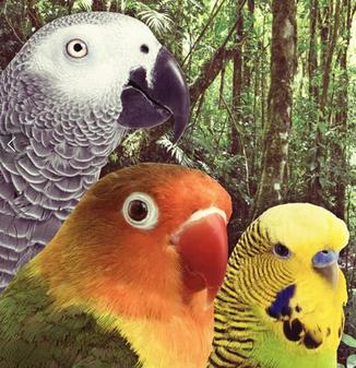 Remington Feed has bird food for Parrots, pictured here, and all domesticated birds