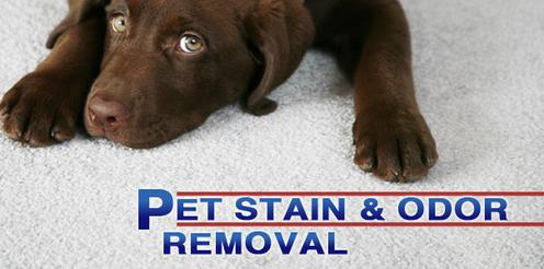 http://www.serviceabq.com/pet-stain---pet-odor-removal.html
