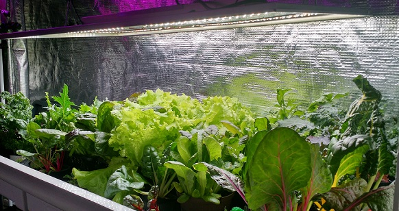 Indoor Hydroponic Vegetable Garden Home page for urban gardens of jax jacksonvilles hydroponic store ebb and flow system that was set up and grown by urban gardens of jax jacksonvilles hydroponic store hydroponic systems grow lights nutrients workwithnaturefo