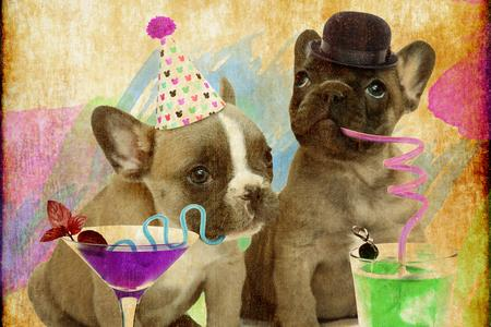 Rock House Frenchies - French Bulldogs For Sale, French