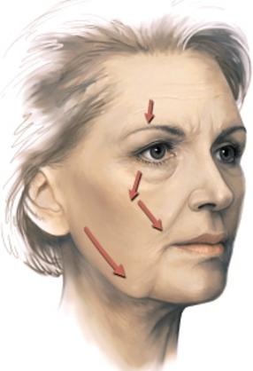 What happens to the cheek muscle as we age?