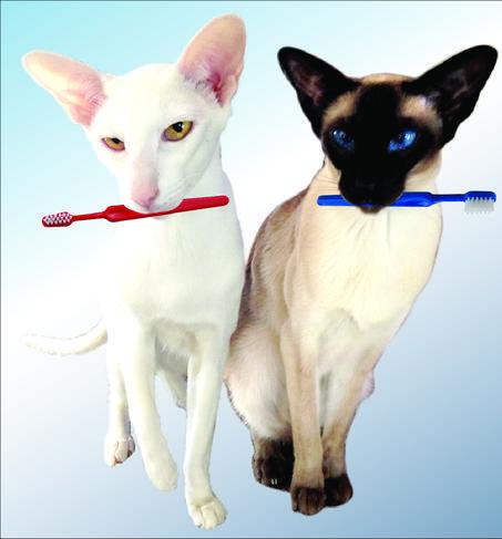 Small Dog Dental Hygiene
