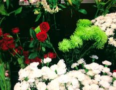 Home amodios garden center nursery flower shop flower shop mightylinksfo